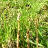 4/25(木)4月分保育料の引落しとなり ます。